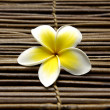 Beautiful frangipani flowers — Stock Photo