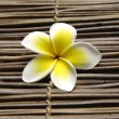 Beautiful  frangipani  — Stock Photo