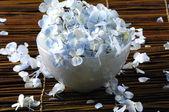 Hydrangea blue petals — Stock Photo
