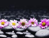 Row of daisy — Stock Photo