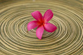Spa red flower — Stock Photo