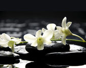 Stones and white orchid — Stock Photo