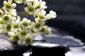 Cherry with therapy stones — Stockfoto