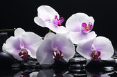 Orchid with zen stones — Stock Photo
