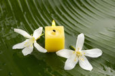Frangipani and candle — Stockfoto