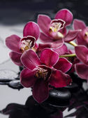 Gorgeous orchid — Stock Photo