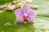Orchid on leaf — Foto Stock