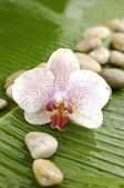 Orchid on leaf — Stockfoto