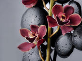 Still life with orchid — Stock Photo