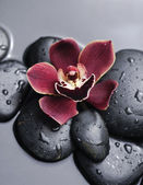 Spa orchid — Stock Photo