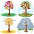 Tree four seasons — Stock Vector