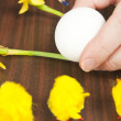 Painting Easter Egg — Stock Photo #22497015