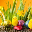 Easter Eggs and Chicks — Stock Photo #22497235