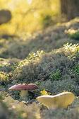 Lichen and Fungi — Stock Photo