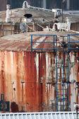 Abandoned Tanks — Zdjęcie stockowe