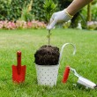 Planting tree in blooming garden — Stock Photo