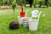 Piantare l'albero nel giardino fiorito — Foto Stock