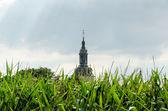 Abbey church in the cornfield — Stock Photo