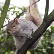 Squirrel in a tree — Stock Photo #22089491