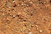 Natural brown ground background with some plant elements — Stock Photo