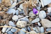 Used syringe on pebbles — Foto Stock