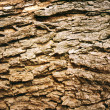 Brown tree bark pattern — Stock Photo