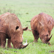 Stock Photo: Two young rhinos feeding on fresh green grass in Rietvlei Dam nature reserve, South Africa
