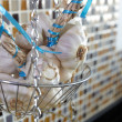 Wire vegetable rack in a kitchen with tied up whole garlic bulbs — Stock Photo