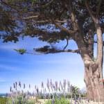 arbustos lavanda púrpuras y verdes bajo un gran árbol — Foto de Stock