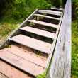 An old wooden staircase and walkway leading into a lush green forest — Stock Photo