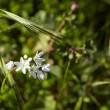 White flowers in the grass — Stock Photo #22093645