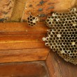 Wasps nest - Stock Photo