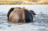 A herd of African elephants — Stock Photo