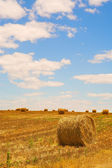 Straw bales on a harvested wheat field — Stock Photo