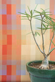 Small tree against an orange block pattern in an office — Stock Photo