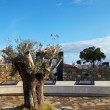 The Olive Tree as a sign of peace, that is part of the Peace Monument - Stock Photo