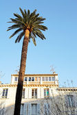 Palm tree and other trees in front of a building in Antibes, France. — Stock Photo