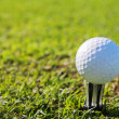 A close-up of a golf ball on a golf tee — Stock Photo
