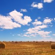 Straw bales on a harvested wheat field at Riversdale in South Africa on a sunny day - Stock Photo