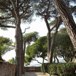 Park with trees in Cannes — Stock Photo