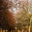 Park in London during the winter. — Stock Photo
