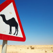 Warning sign for camels on the road next to the roadway in Qatar, Middle East — Stock Photo #22129935