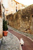 White cat sitting in an alleyway in the quaint little French hilltop village of Saint-Paul de Vence, Southern France, — Stock Photo