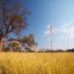 Постер, плакат: Grassland African savannah