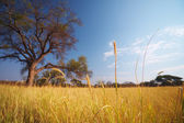 Grassland African savannah — Stock Photo