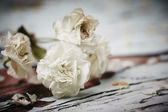Small White Flower — Stock Photo