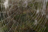 Openwork cobweb in dewdrops — Stock Photo