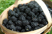 Blackberries in a basket — Stock Photo