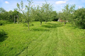 Apple orchard in spring time — Stock Photo
