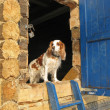 Dog guards house — Stock Photo #31190109